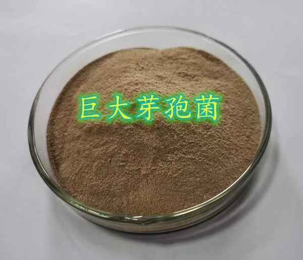Application of Bacillus giganteus to agriculture