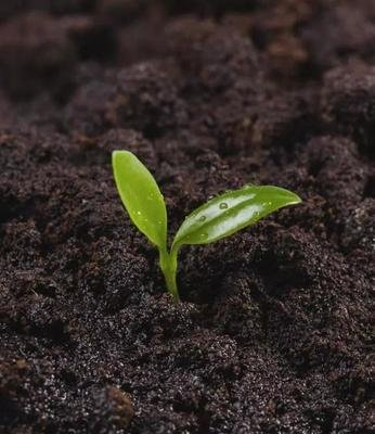 Why are more and more people using microbial agents in agricultural production?