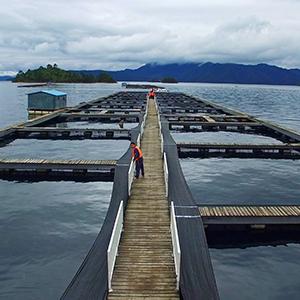 Aquaculture Water Treatment