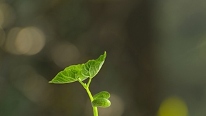 Agriculture Soil Improvement