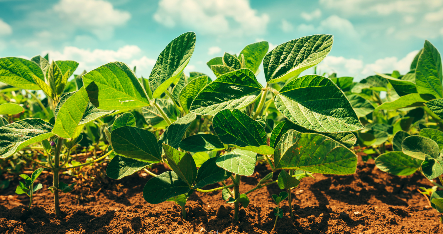 Why more and more people choose microbial fertilizer