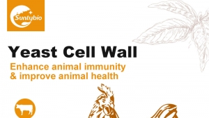 One minute to understand yeast cell wall