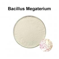 Bacillus megatherium