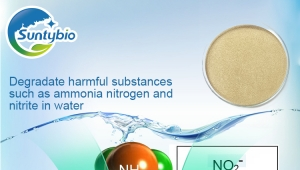Application of Bacillus subtilis in improving water quality