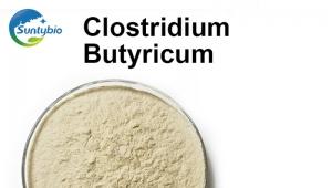 Clostridium butyric acid used in animal breeding